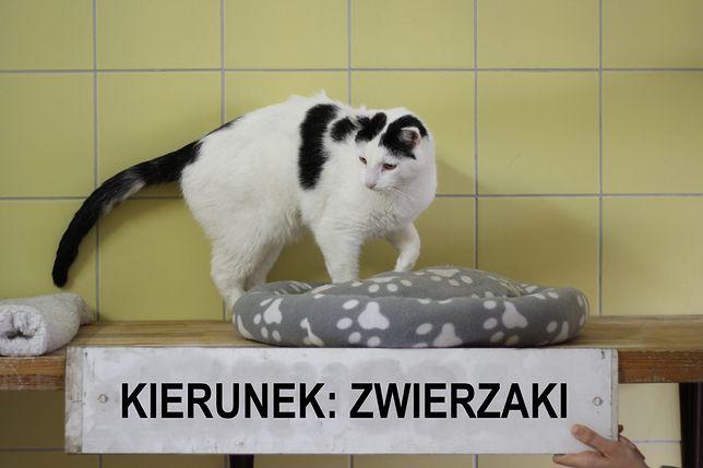 Wrocław. Kolekcjonerskie trofea za dobre serce. MPK nagrodzi sympatyków zwierząt