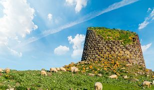 Piesek zostanie w gospodarstwie i będzie pilnował owiec (zdjęcie poglądowe)
