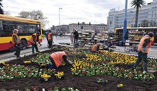 Bratki, stokrotki i tulipany. 222 tysiące kwiatów na ulicach Warszawy