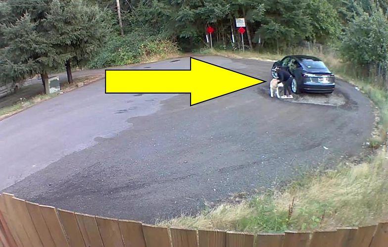 Poruszające nagranie. Przyjechała z psem na parking. Zostawiła go i uciekła