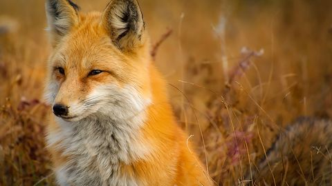 Google, Mozilla i Opera komentują decyzję Microsoftu. Czy Edge z Chromium pomoże Firefoxowi?