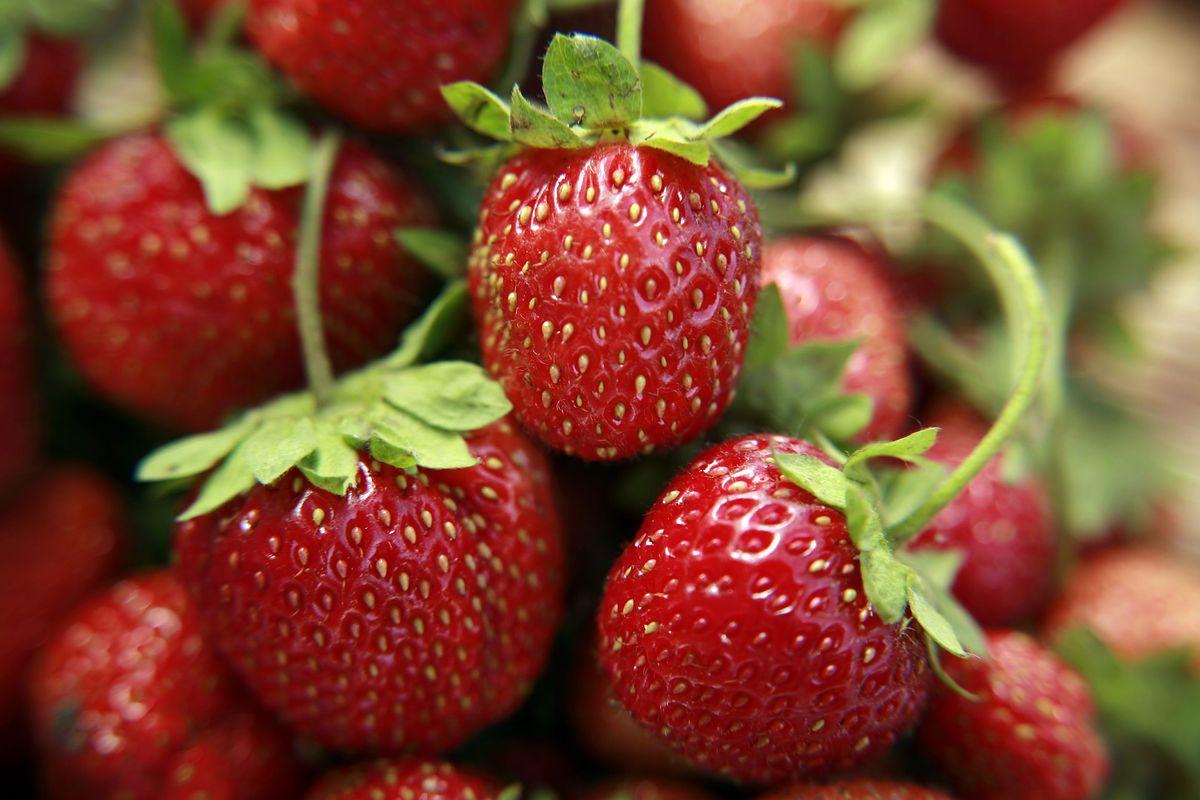 Chcesz kupić truskawki - zbierz je sam. Plantatorzy radzą sobie z brakiem rąk do pracy