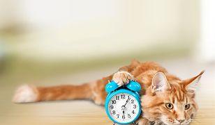 Zmiana czasu zostanie wycofana dopiero w 2021 roku? Jest projekt komisji europejskiej