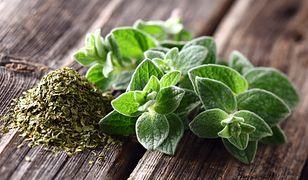Oregano jest składnikiem ziół prowansalskich
