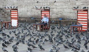 Gołębie żerujące na resztkach pokarmu w Istambule