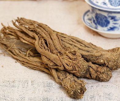 Dzięgiel chiński - korzeń