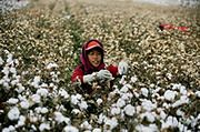 Drożejąca bawełna może pogorszyć wyniki kilku spółek