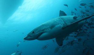 Australia: rekin zaatakował turystę