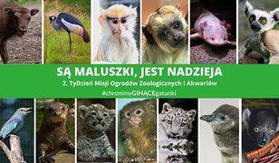 Warszawa. Ogrody zoologiczne w Polsce świętują. Mają wspólną misję