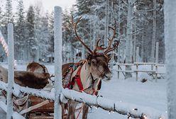 """Laponia. """"Święta są zagrożone"""""""