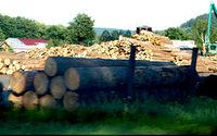 Biomasa z drewna pod lupą Urzędu Regulacji Energetyki