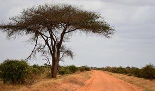 Na trasie z Nakuru do Eldoret zginęło w grudniu ponad 100 osób