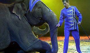 Dania kupi cyrkowe słonie. Chcą zapewnić im spokojną starość