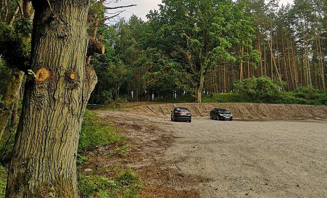"""Członkowie """"Obozu dla Mierzei Wiślanej"""" przypadkiem odkryli wycinkę drzew niedaleko inwestycji"""