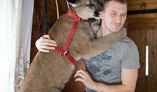 Puma Nubia pozostanie w zoo w Chorzowie