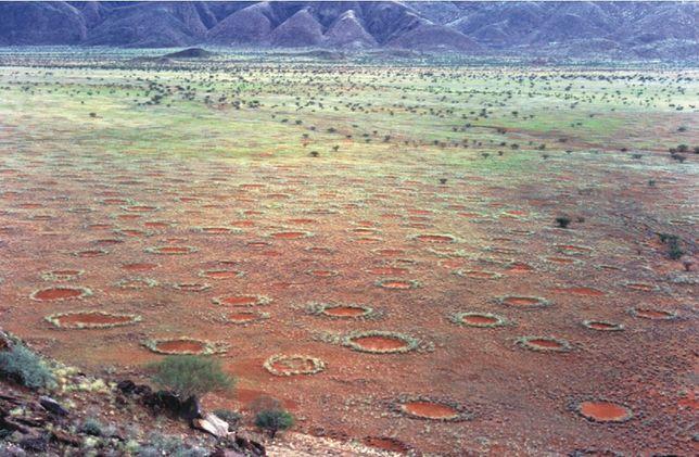 """Tajemnicze """"kręgi wróżek"""" na pustyni"""