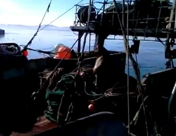 Lew morski rozprawił się z natrętnym psem. Zobacz nagranie