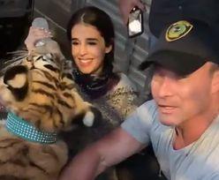 Tygrys włóczył się ulicami Houston. Finał głośnej sprawy z USA