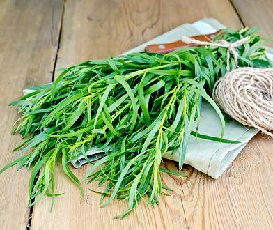 Estragon - właściwości i zastosowanie aromatycznej przyprawy