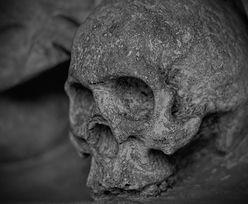 Małopolska. Archeolodzy natrafili na tajemnicze kości w Bochni