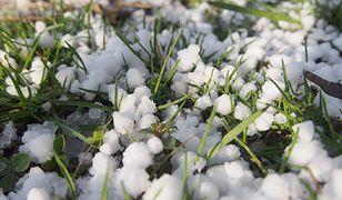 Krupa śnieżna w Polsce