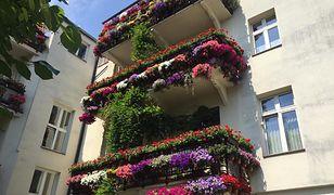 Balkony pełne kwiatów. Robią wrażenie
