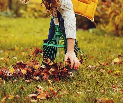 Jesienne prace w ogrodzie sprawią, że na wiosnę rozkwitnie z większą siłą