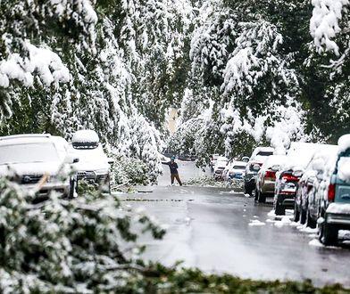 Stany Zjednoczone. Pojawiły się pierwsze opady śniegu
