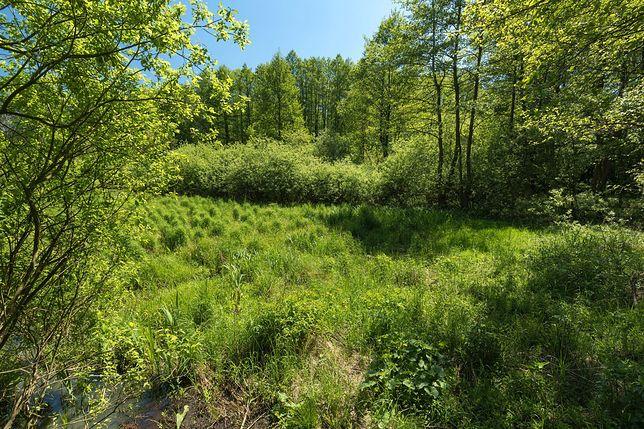 Las Bemowo, rezerwat przyrody Łosiowe Błota