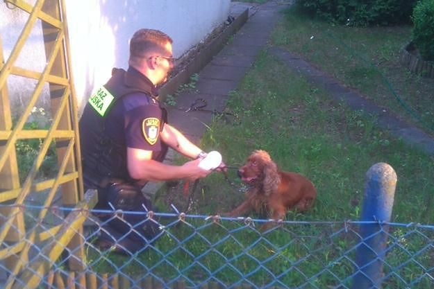 W Poznaniu ktoś porzucił psa z założonym kagańcem