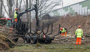 Wycinki związane są z modernizacją linii kolejowych w okolicach Opola (zdjęcie ilustracyjne)