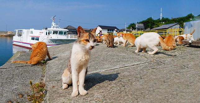 Zwierzęta gromadzą się głównie w porcie. Dla nich statek to przede wszystkim źródło pożywienia