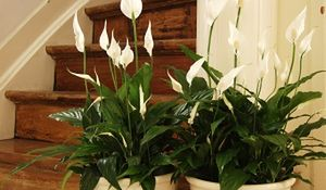 Rośliny oczyszczające powietrze w domu