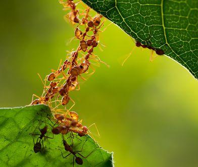 Wielu z nas po prostu się nudzi, więc udaje mrówki