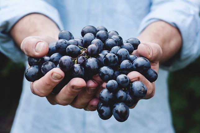 To najlepszy moment, by rozmnożyć sadzonki winorośli