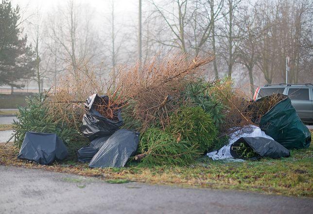 Nie wyrzucaj choinki byle gdzie. To cenny odpad, który można zagospodarować.