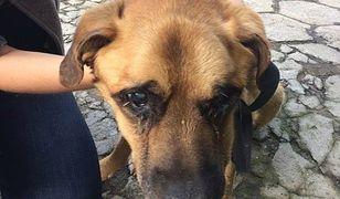 Zagłodzony pies na terenie jednej z warszawskich firm. Przerażający widok [WIDEO]