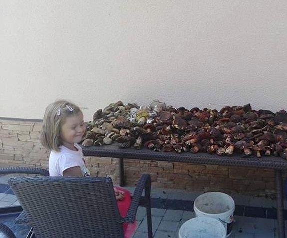 Grzybobranie trwa w najlepsze. Na zdjęciach naszych internautów widać mnóstwo grzybów!
