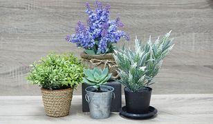 Firma zapewnia, że kwiaty będą regularnie podlewane i osłonięte przed letnim słońcem
