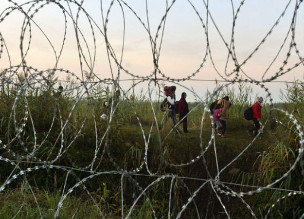 Ogrodzenie z drutu kolczastego na granicy węgiersko-serbskiej