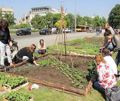 Miejski Ogród Warzywny