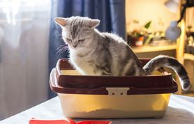 Właściciele kotów zagrożeni chorobą psychiczną (WIDEO)