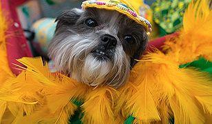 Psi karnawał w Rio