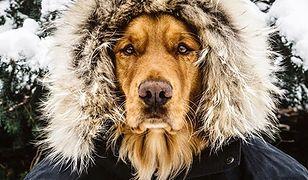 Ten pies kocha podróże