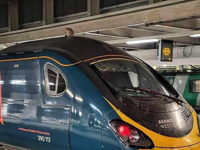 Wielka Brytania. Kotka chciała przejechać się Pendolino (Fot. networkrailmediacentre.co.uk)