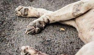 Bestialsko zabił dwa psy, martwe zostawił w stawie. Nagroda za znalezienie sprawcy