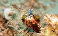 Odkrycia naukowe. Niespotykany gatunek skorupiaka w jeziorze na Mazurach