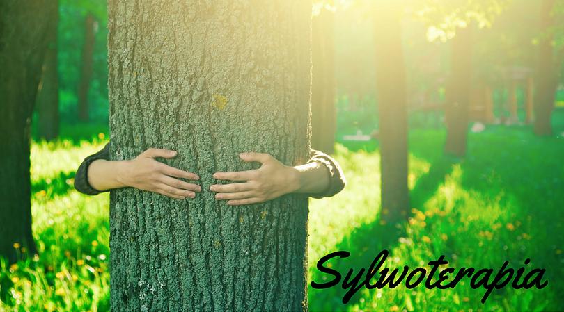 Drzewolecznictwo, czyli sylowterapia