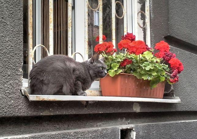 Miasto zachęca do bezpłatnego czipowania zwierząt