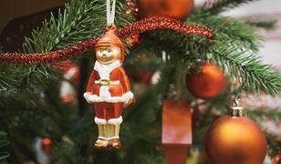 Co z choinką po świętach? Drzewka wrócą do mieszkańców Kościerzyny w postaci ciepła